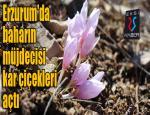 Erzurum'da baharın müjdecisi kar çiçekleri açtı