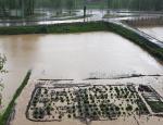 Narman'da sağanak yağmur hayatı olumsuz etkiledi