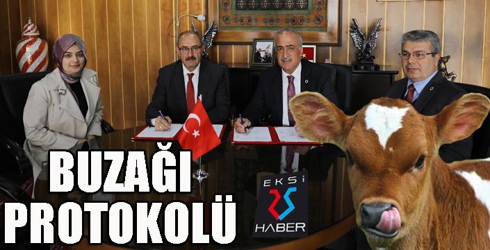 Atatürk Üniversitesi ile DAP, buzağılar için protokol imzaladı